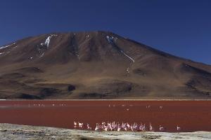 Laguna Colorada_2