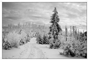 Winterwald_2