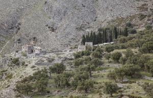 Olivenhain-Albanien