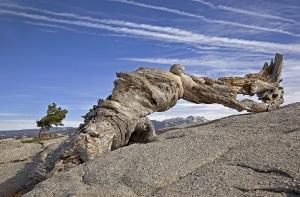Yosemite-NP_2