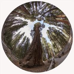 Sequoia NP_Kalifornien