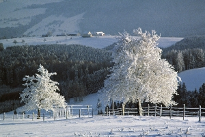 Weißer Frost