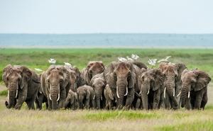 Elefantenfront