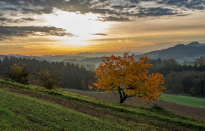 Herbst beim Premgruber_1