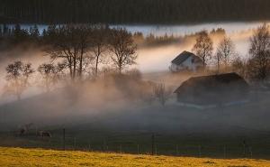 Perde im Nebel_1