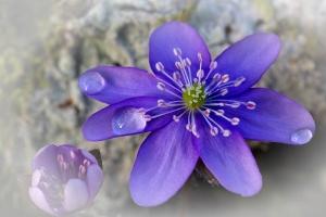 Blütenpracht_1