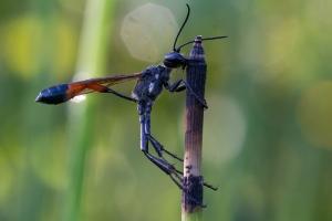 Insekt_1