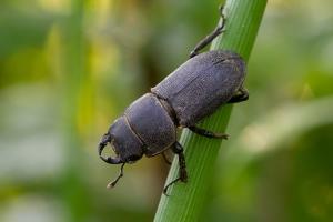 Insekt 2_1
