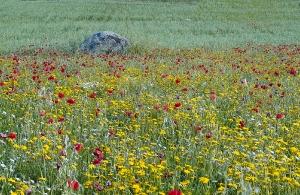 Extremadura Spanien_1
