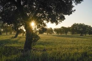 Extremadura Spanien_3
