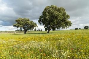 Extremadura Spanien_5
