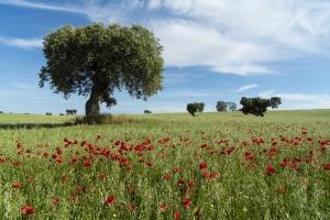 Extremadura Spanien_6