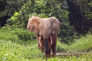 Zentralafrika_6