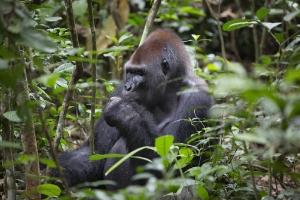 Zentralafrika_9