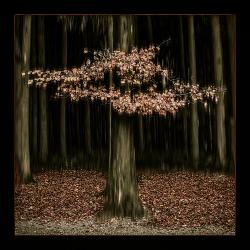 Herbstwald_1