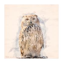 Schnee-Eule _1