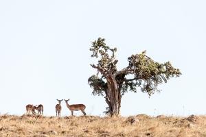 Afrika_2