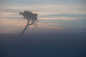 Sonnenaufgang in der Masai Mara_1