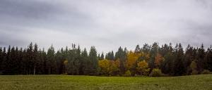 Waldviertel_1