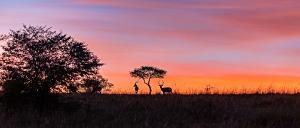 Sonnenaufgang in der Mara_1