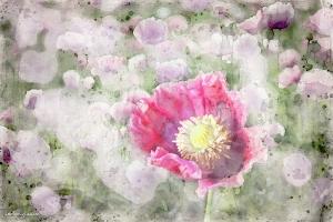 4_Blumenwiese